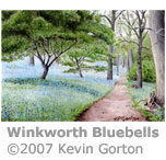 Bluebells at Winkworth arboretum by Kevin Gorton