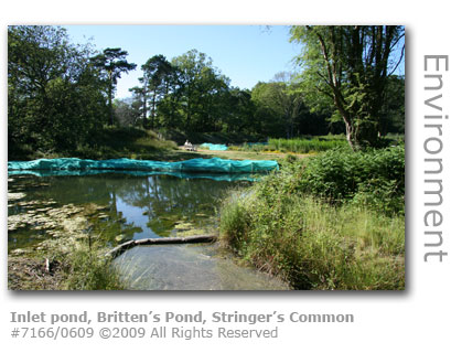 Inlet filtration pond, Britten's pond, Stringer's Common, Worplesdon, Guildford, Surrey