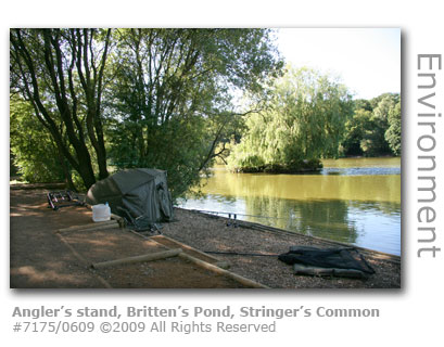 Angler's stand at Britten's Pond, Stringer's Common, Guildford, Surrey