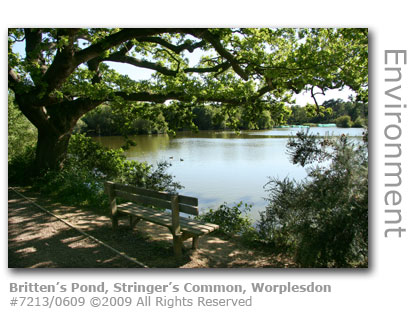 Britten's Pond, Stringer's Common, Worplesdon, Guildford, Surrey
