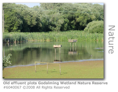 Old effluent treatment plots at Godalming Wetland Nature Reserve