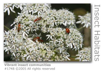 VIBRANT INSECT COMMUNITIES