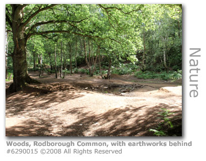 Earthworks at Rodborough Common, Milford