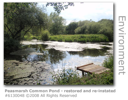 Peasmarsh Common Pond - reinstated
