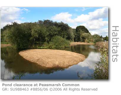 Peasmarsh Common Pond