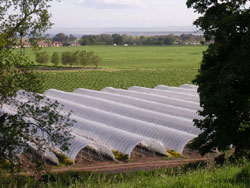 Typical polytunnels