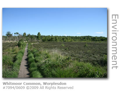 Whitmoor Common, Worplesdon, Guildford, Surrey